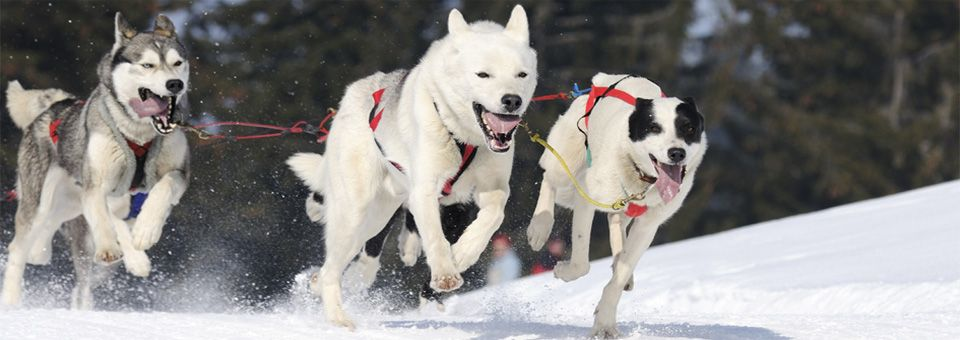 Dog Mushing